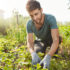 Close up outdoors portrait of mature attractive bearded male farmer in blue t-shirt smiling, working on farm, plans green sprouts, picking vegetables.